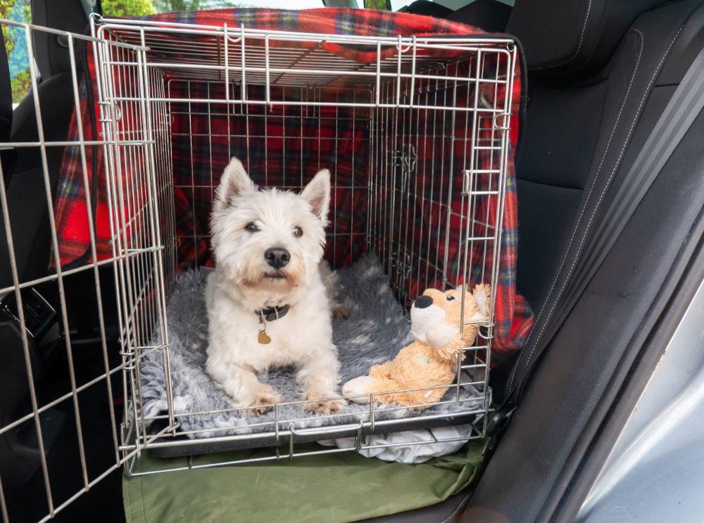 Dog Crate Car