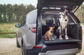 Best car accessories for your dog